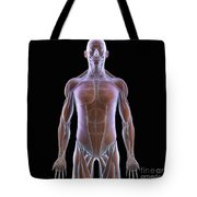 The Muscles Of The Upper Body Tote Bag