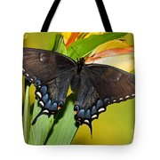Tiger Swallowtail Butterfly, Dark Phase Tote Bag