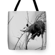 Treed Opossum Tote Bag