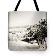 Trees In Snow Tote Bag