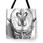 Vesalius: Brain, 1543 Tote Bag