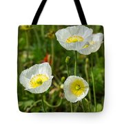 White Iceland Poppy - Beautiful Spring Poppy Flowers In Bloom. Tote Bag