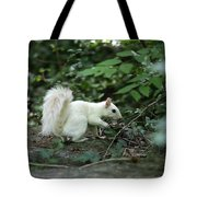 White Squirrel Tote Bag