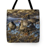 Whitefront Goose Tote Bag