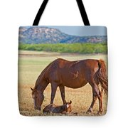 Wild Horses Mother And Foal Tote Bag