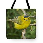 Wilsons Warbler Tote Bag