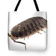 Woodlouse Species Porcellio Wagnerii Tote Bag