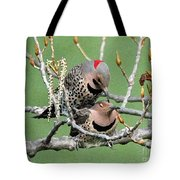 Yellow-shafted Northern Flickers Tote Bag