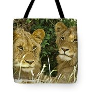 Young Brothers Tote Bag
