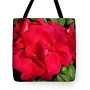 Zonal Geranium Named Candy Cherry Tote Bag