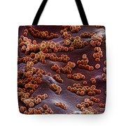 Staphylococcus Aureus Tote Bag
