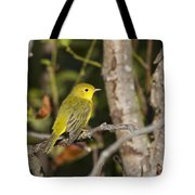 Yellow Warbler Tote Bag