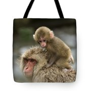 Snow Monkeys Japan Tote Bag