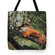 25- Iguanas Tote Bag