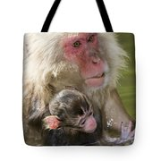 Snow Monkeys, Japan Tote Bag
