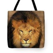 Lion Dafrique Panthera Leo Tote Bag