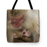 Snow Monkeys, Japan Tote Bag