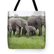African Elephants Grazing  Kenya Tote Bag