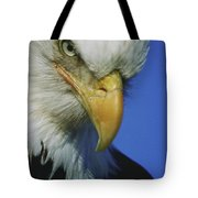 American Bald Eagle Haliaeetus Tote Bag