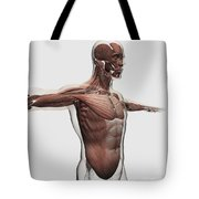 Anatomy Of Male Muscles In Upper Body Tote Bag