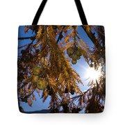 Autumn Coniferous Tote Bag