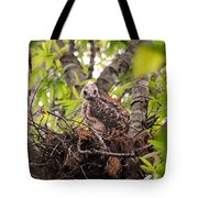 Baby Red Shouldered Hawk In Nest Tote Bag