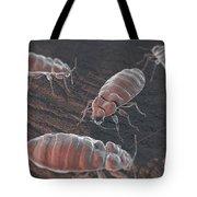 Bed Bugs Cimex Lectularius Tote Bag
