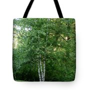 3 Birch Trees On A Hill Tote Bag