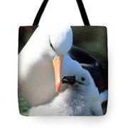 Black-browed Albatross With Chick Tote Bag