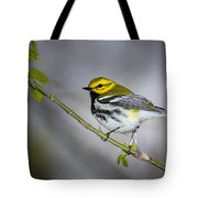 Black Throated Green Warbler Tote Bag
