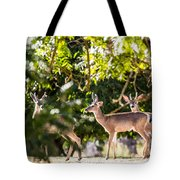 3 Bucks Caught In A Orchard Tote Bag