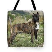 Canary Dog Tote Bag