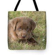 Chocolate Labrador Puppy Tote Bag