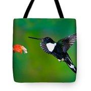 Collared Inca Hummngbird Tote Bag