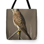 Common Kestrel Falco Tinnunculus Tote Bag