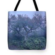 Craggy Gardens North Carolina Blue Ridge Parkway Autumn Nc Sceni Tote Bag