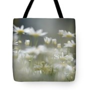 Daisies Tote Bag by Michael Goyberg