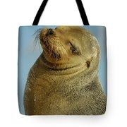 Galapagos Sea Lion Zalophus Wollebaeki Tote Bag