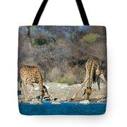 Giraffes Giraffa Camelopardalis Tote Bag