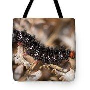 Glanville Fritillary Butterfly Caterpillar - Melitaea Cinxia Tote Bag