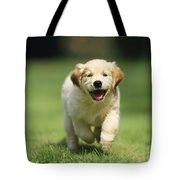 Golden Retriever Puppy Tote Bag