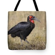 Ground Hornbill Tote Bag