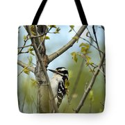 Hairy Woodpecker Tote Bag by Linda Freshwaters Arndt