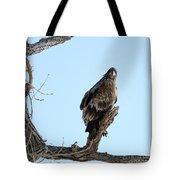 Immature Bald Eagle Tote Bag