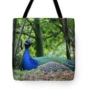 Indian Blue Peacock Tote Bag