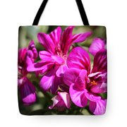 Ivy Geranium Named Contessa Purple Bicolor Tote Bag