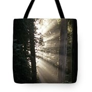 Jedediah Smith Redwoods State Park Redwoods National Park Del No Tote Bag