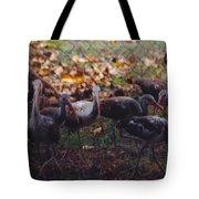 Juvenile Ibis Tote Bag