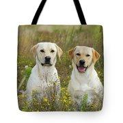 Labrador Retriever Dogs Tote Bag