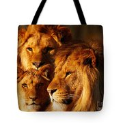 Lion Family Close Together Tote Bag